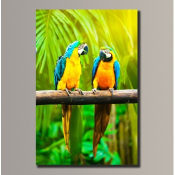 Картина (не раскраска) HolstArt Попугаи 35*54см арт.HAS-068