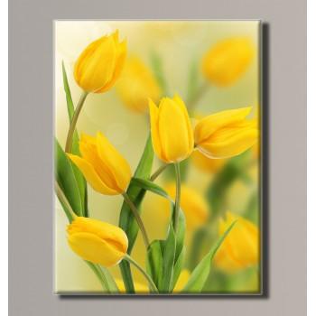 Картина (не раскраска) HolstArt Желтые тюльпаны 41*54 см арт.HAS-196