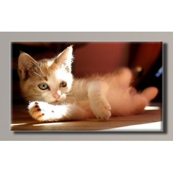 Картина (не раскраска) HolstArt Котёнок 55*32,5см арт.HAS-222