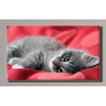 Картина (не раскраска) HolstArt Котёнок 55*32,5см арт.HAS-224