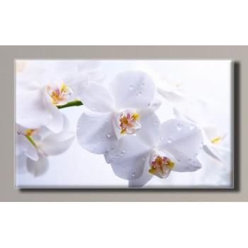 Картина HolstArt Белая орхидея 55*32,5см арт.HAS-270