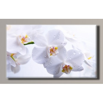 Картина (не раскраска) HolstArt Белая орхидея 55*32,5см арт.HAS-270