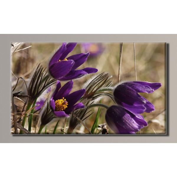 Купить Картина (не раскраска) HolstArt Цветы 54*32см арт ...