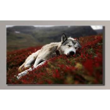 Картина (не раскраска) HolstArt Волк на горе 90*55см арт.HAS-414