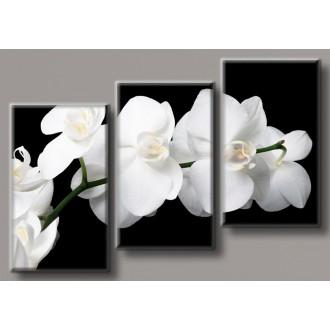 Картина модульная HolstArt Белая орхидея 3 70*102см арт.HAT-190