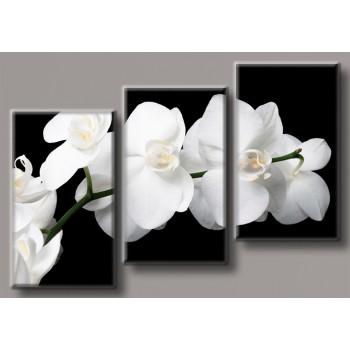 Картина модульная HolstArt Белая орхидея 70*102см арт.HAT-190