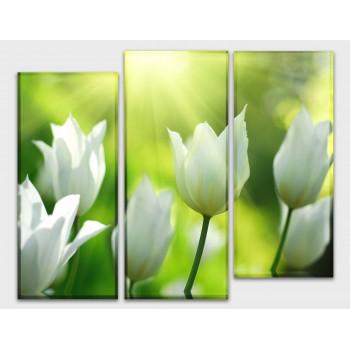 Картина модульная HolstArt Белые тюльпаны 90*120см 3 модуля арт.HAT-206