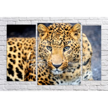 Картина модульная HolstArt Леопард 4 79*120 см арт.HAT-222