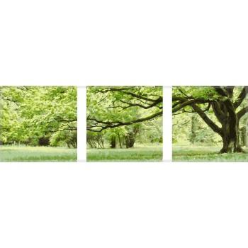 Картина модульная по номерам Babylon Зеленое дерево 50*150 см 3 модуля арт.MS14057