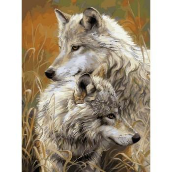 Картина по номерам Babylon Степные волки 30*40 см (в коробке) арт.VK034