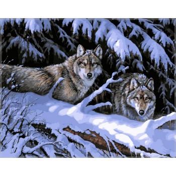 Картина по номерам Babylon Волки в лесу 40*50 см (в коробке) арт.VP121